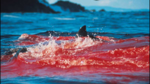blood-in-water_large